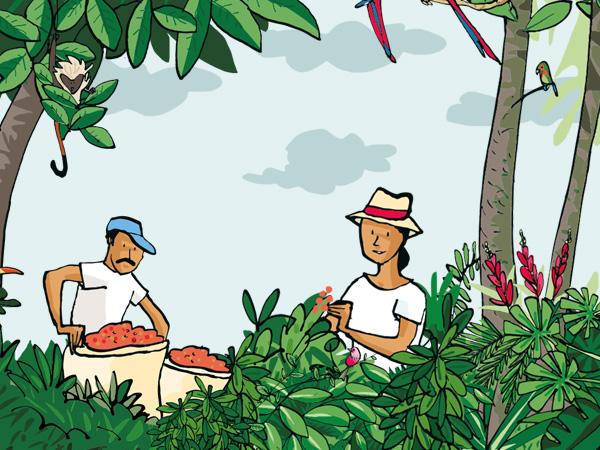 Puro Organic & Fairtrade Coffee